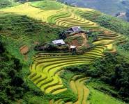 Ruộng Bậc Thang Sapa