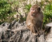 Thăm đảo Khỉ - Cát Bà