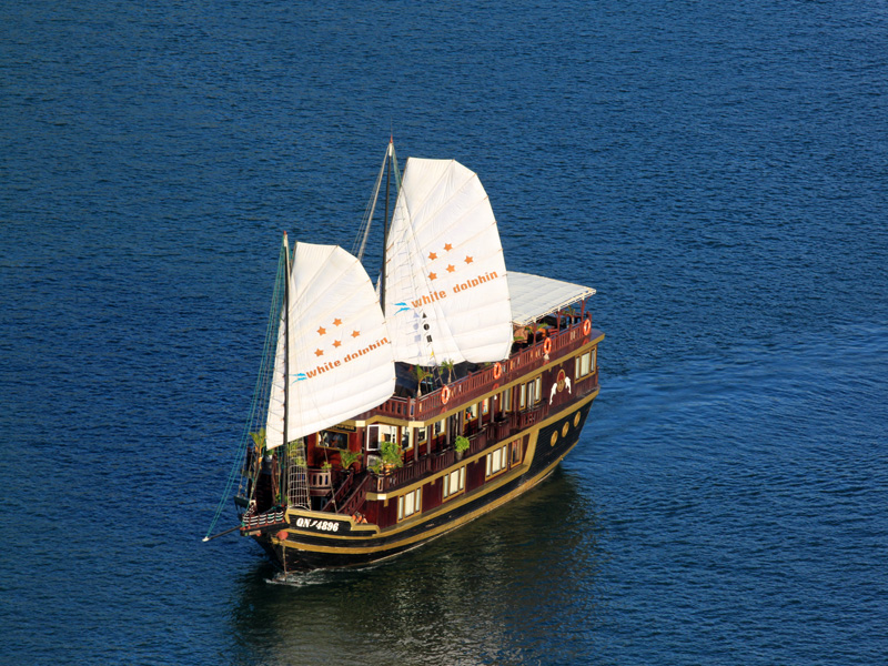 Du thuyền While Dolphin